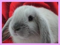 10 интересных фактов о кроликах